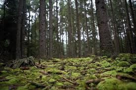 Bosque caducifolio templado