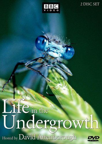 Life in the Undergrowth (TV Series 2005– )