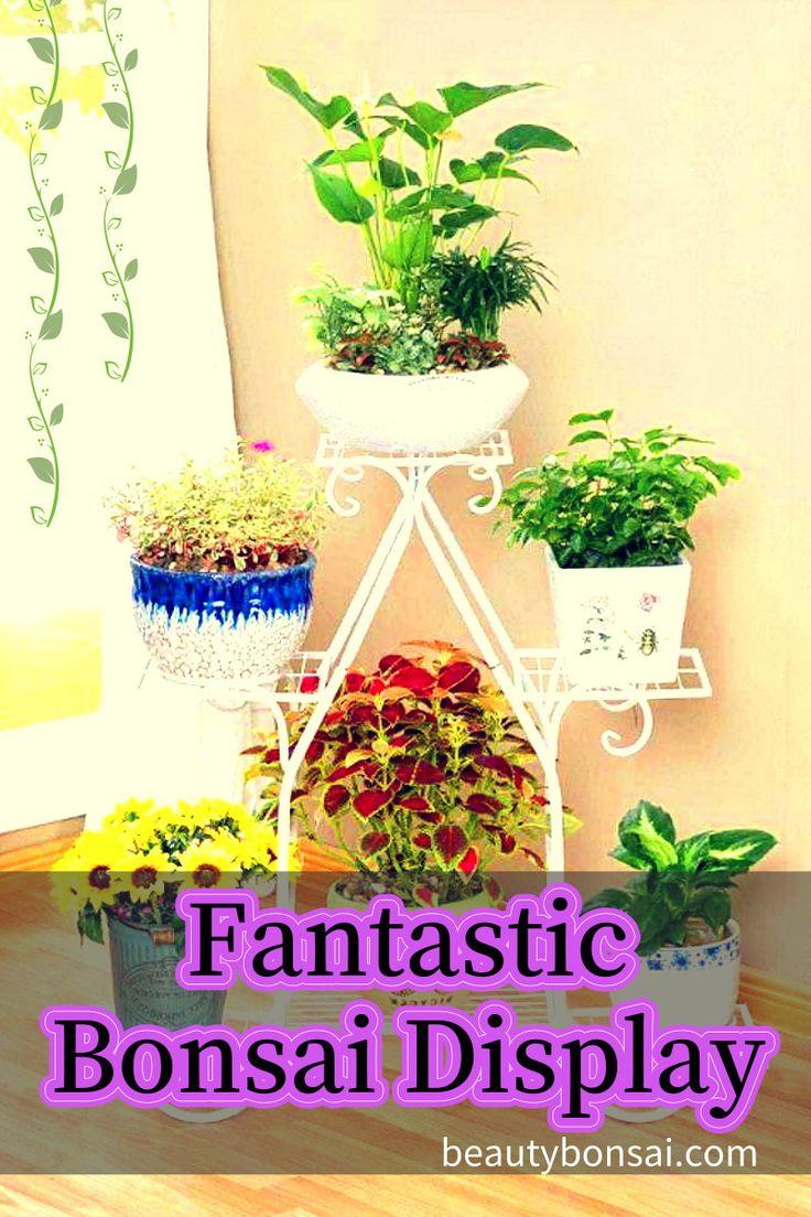 bonsai display ideas