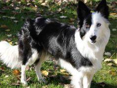 Avere un animale domestico: 9 benefici per corpo e mente