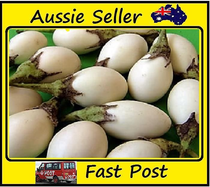 Egg White Eggplant Seeds Organic Vegetable Seed 100 Seed Lots Home Garden