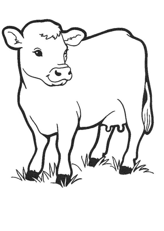 Printable Cow Coloring Pages Cow Coloring Pages Cow Drawing Animal Coloring Pages
