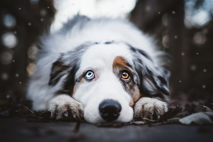 My Most Popular Pics Since I Started Dog Photography