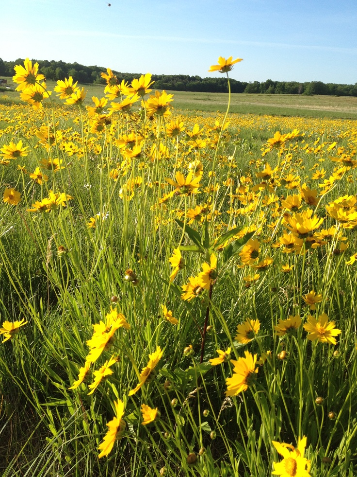 58 best the wildflower farm i love images on pinterest wildflowers