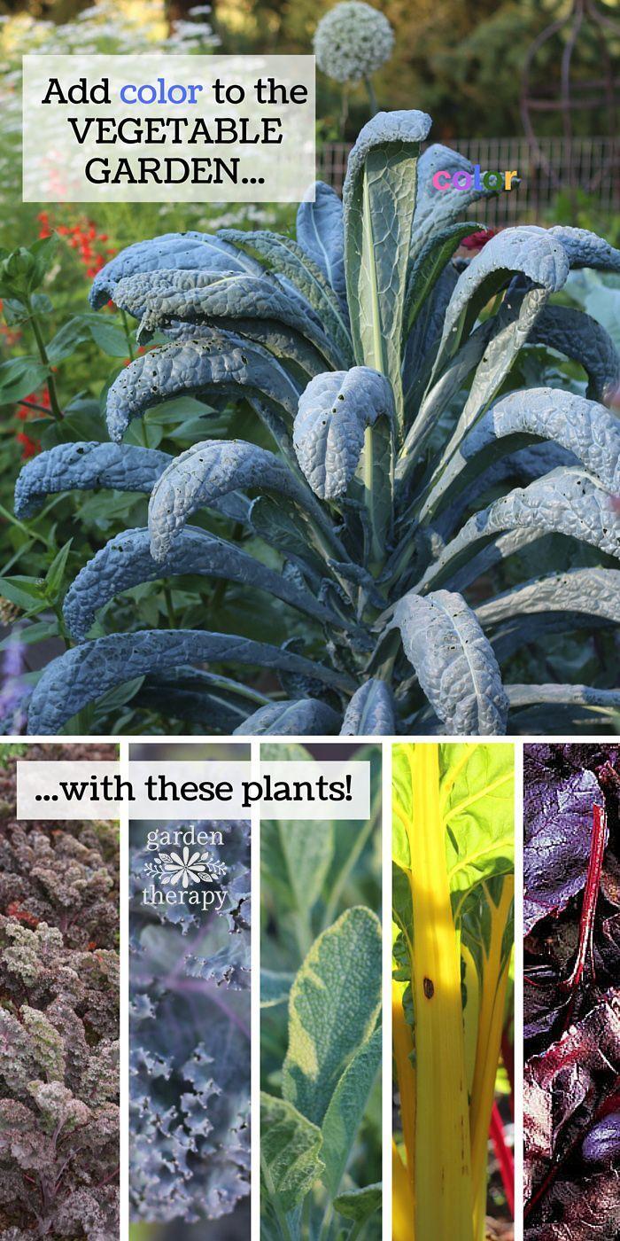 Design a decorative vegetable garden with a rainbow of for Ornamental vegetable garden design