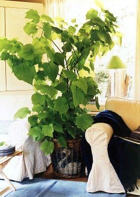 Welche Pflanzen entgiften und reinigen die Luft - Garten & Pflanzen News