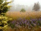Trawy ozdobne kolekcja plenery