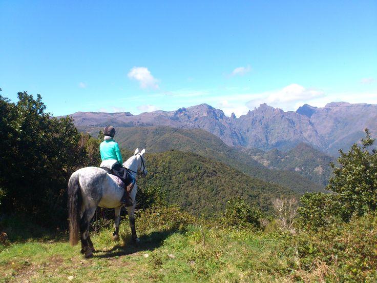 Apolo takes beautiful pictures and the view is not bad either!  #horses #chevaux #pferd #horseriding #équitation #reiten #madeiraisland #laurissilva #fun #thingstodo #sun #picoareeiro #picoruivo #leisureriding