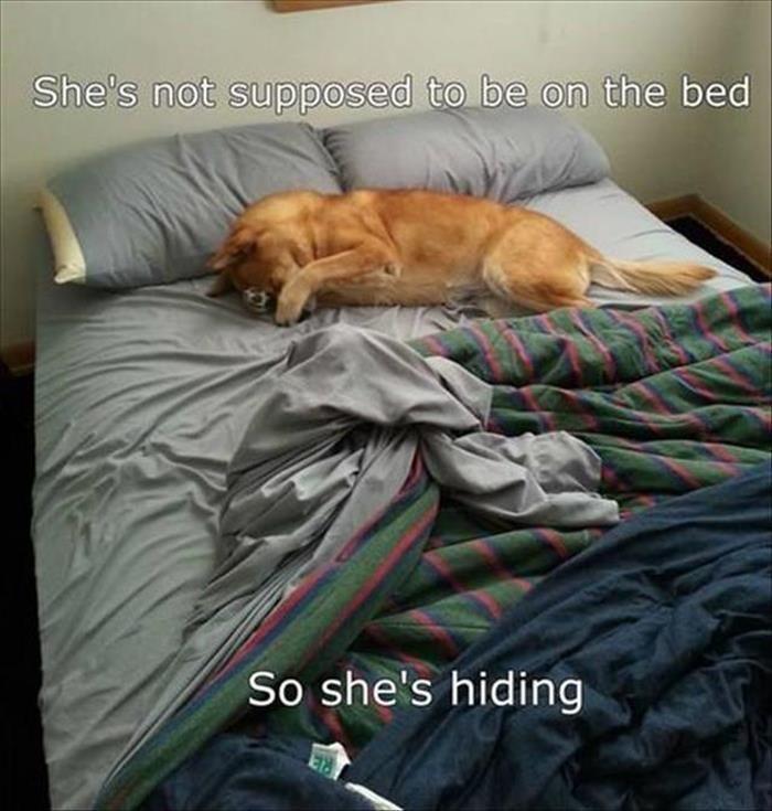 So she's hiding