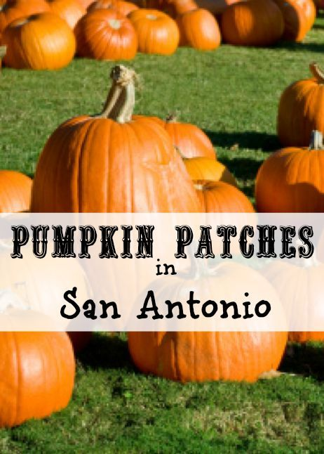 Pumpkin patches in San Antonio, TX