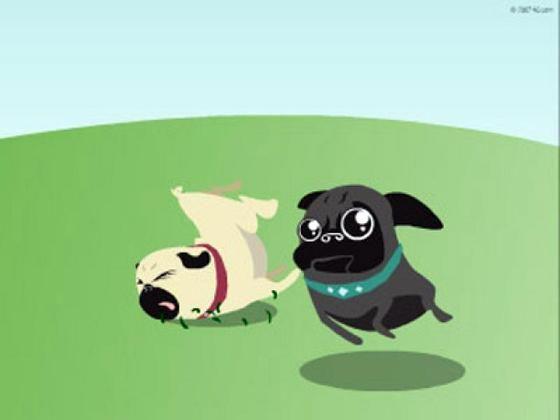 Pug Information And Facts | Buzz Master revient très vite avec de nouveau Buzz !!!