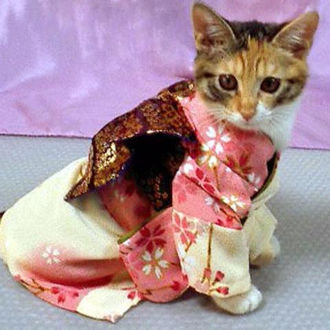 着物・ピンク・桜柄