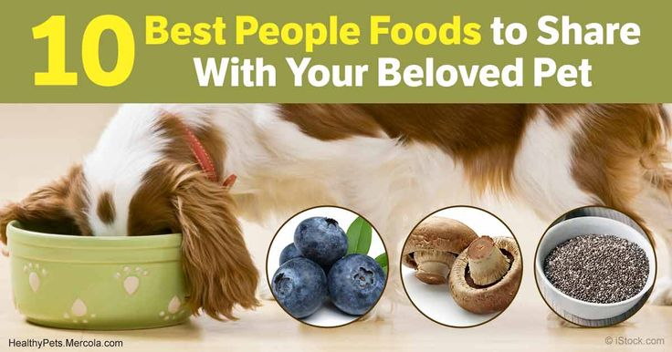 You may be surprised at some of these foods on this list, but they all make powerhouse additions to your dog's regular food, no matter what type you're feeding. http://healthypets.mercola.com/sites/healthypets/archive/2017/06/12/fresh-food-meals-for-dogs.aspx?utm_source=petsnl&utm_medium=email&utm_content=art1&utm_campaign=20170612Z1&et_cid=DM147406&et_rid=2040398488