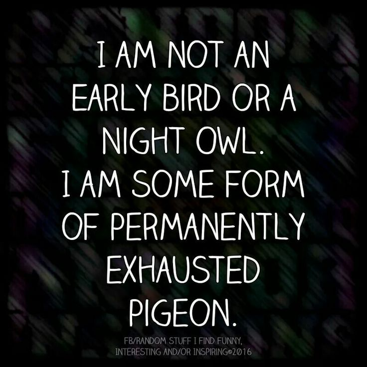 I am not an early bird or a night owl. I am some sort of permanently exhausted pigeon.