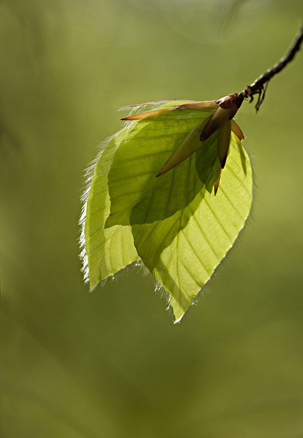 """March   """"Let all the green leaves be mine as long as the trees define shades created by their limbs . . ."""" ~ Munia Khan"""