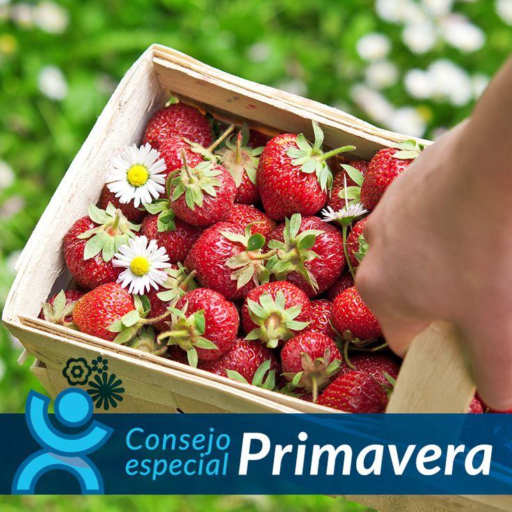 Una de las frutas más sabrosas y ricas de la primavera son las #fresas. Te las recomendamos por sus propiedades antioxidantes y antinflamatorias