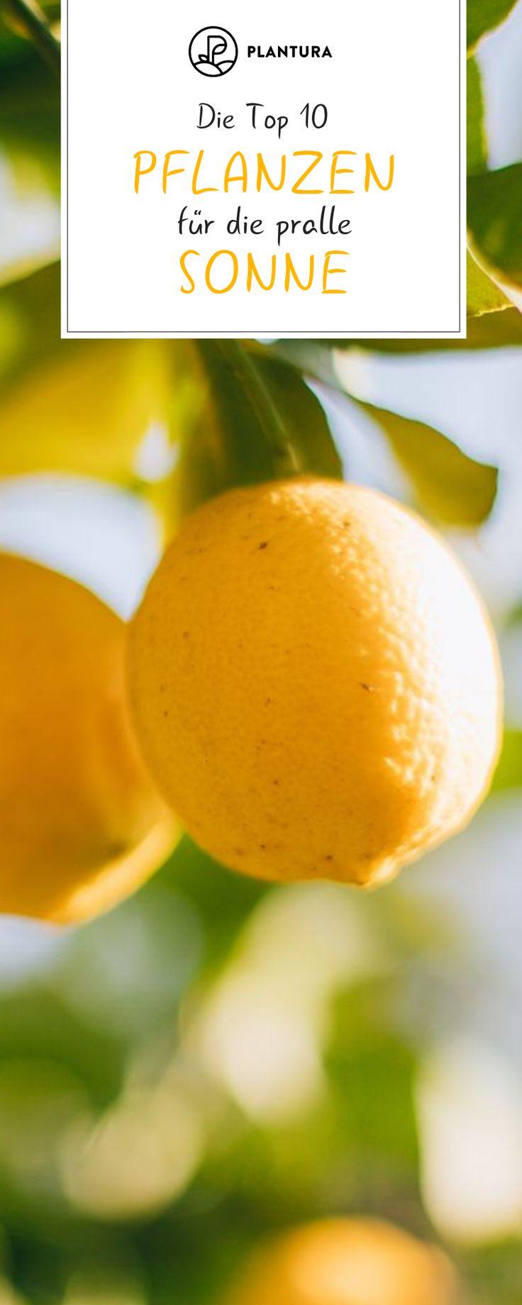 Pflanzen für die pralle Sonne: Die Top 10 für Garten & Balkon