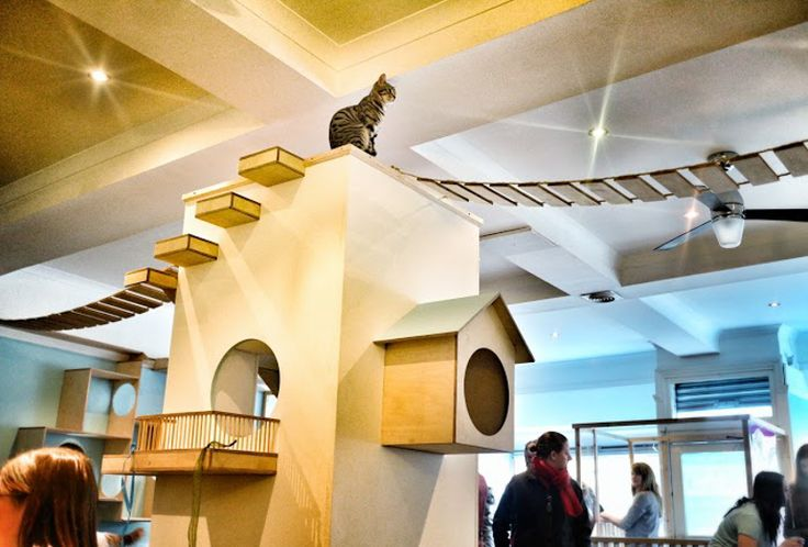 Scotland's first cat cafe opens, and it has 12 cute little resident cats that patrons are encouraged to interact with.