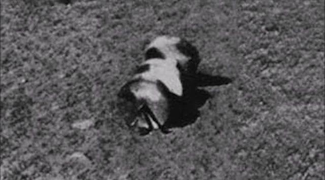 Fotos da superfície lunar tiradas por soviéticos em 1966 já revelava peças e artefatos extraterrestres ~ Sempre Questione