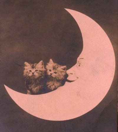 paper moonCat, Stars, Pink Paper, Paper Moon, Sweets Dreams, Kittens, Fawns Gehweil, Moon Kitty, The Moon