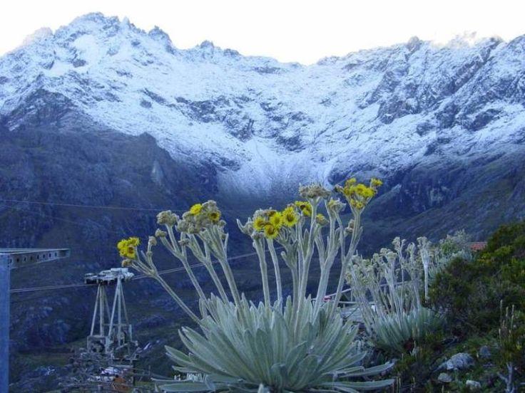 Pico Espejo Frailejones Paramos, S.Nevada Edo. Mérida,