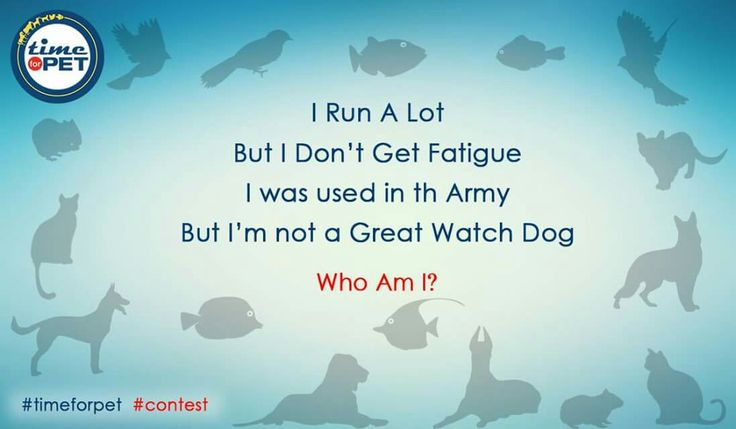 Find the animal in the riddle. #timeforpet #contestalert #contest #timeforcontest #riddle #solveitwinit #pets #bangalore #thursday