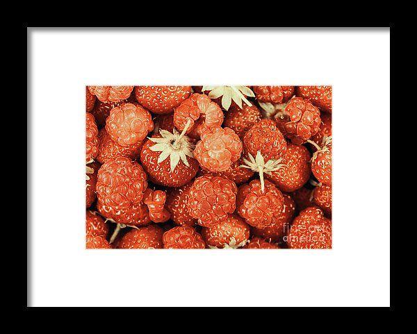 Fresh Red Raspberry Fruits Background Framed Print