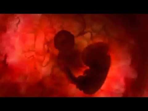 La nascita della vita