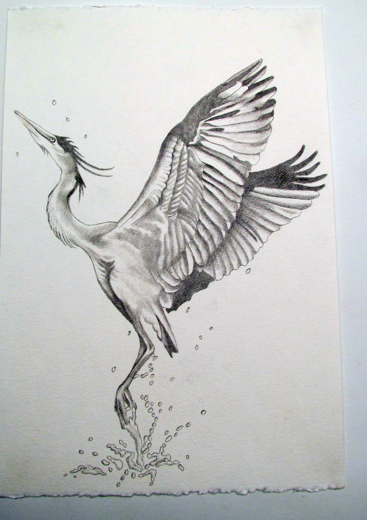 blue heron tattoo sketch