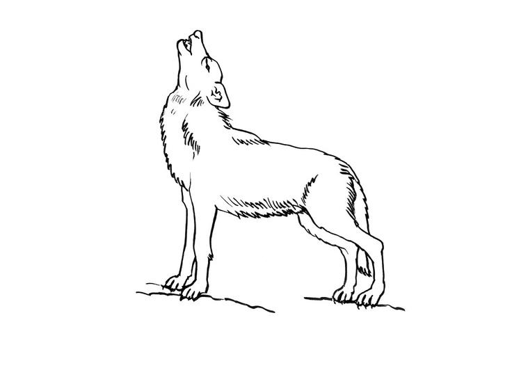 Dessins de loups colorier pinterest - Gulli fr coloriage ...