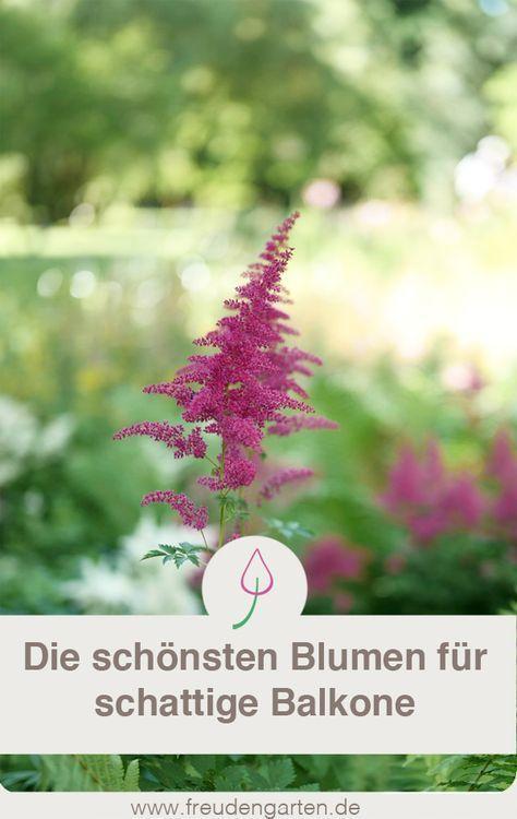 Schattenpflanzen Fur Den Balkon Garten Pinterest Garden Love