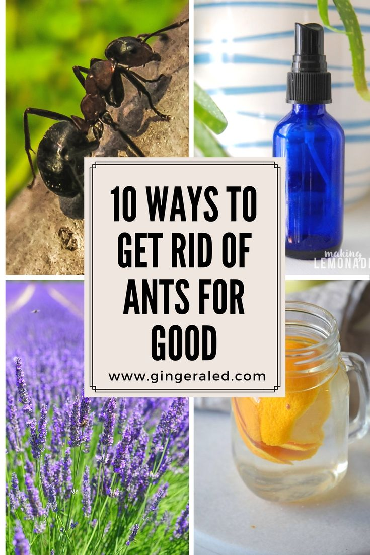 how to get rid of flying ants overnight