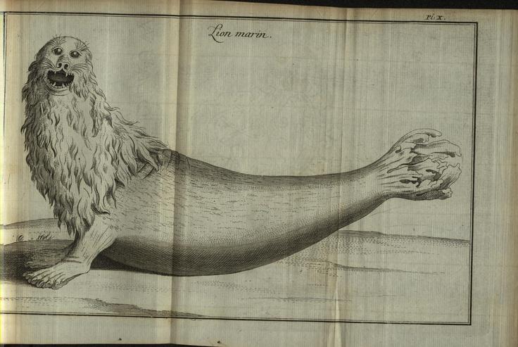 Lion marin. Journal historique d'un voyage fait aux Îles Malouines en 1763 & 1764 v.2 Berlin :Etienne de Bourdeaux,1769 Biodiversitylibrary. Biodivlibrary. BHL. Biodiversity Heritage Library