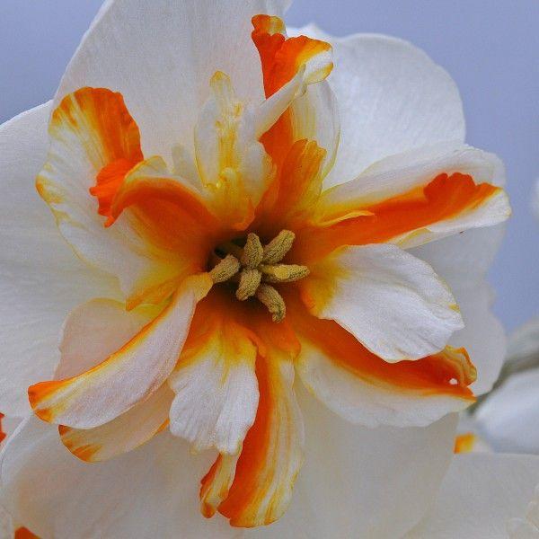 43 best Orange images on Pinterest   Balkon, Das leben und Leuchten