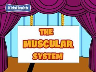 Kids Health The Muscular System