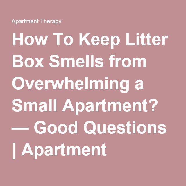 Best 25+ Litter box smell ideas on Pinterest | Litter box, Diy ...