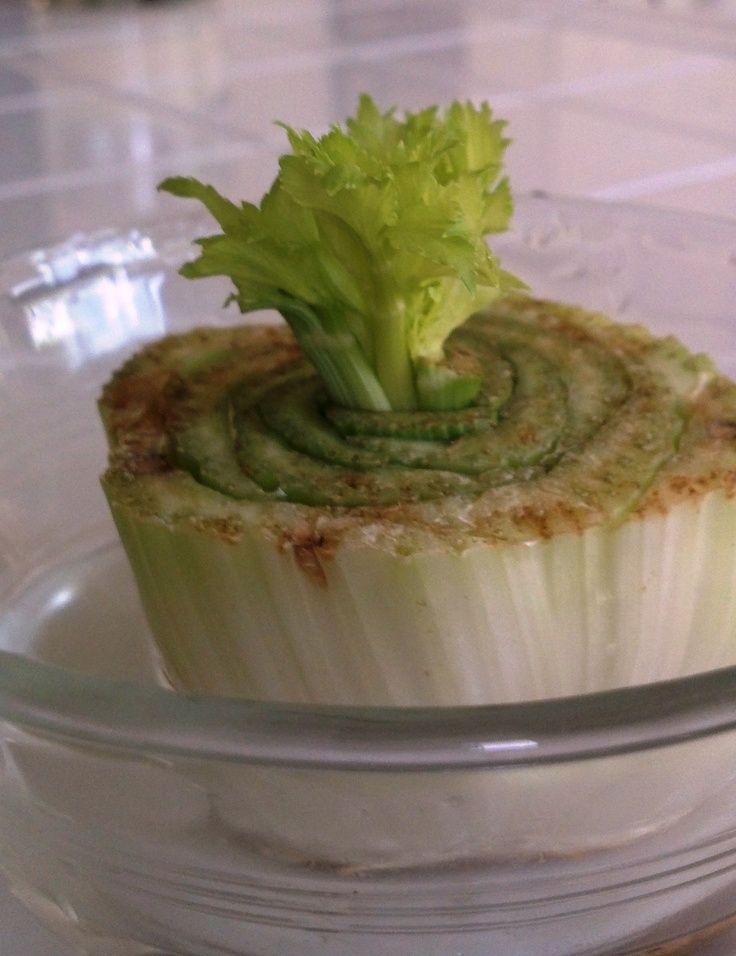 ¿Cómo volver a crecer el apio, el ajo y las cebollas verdes