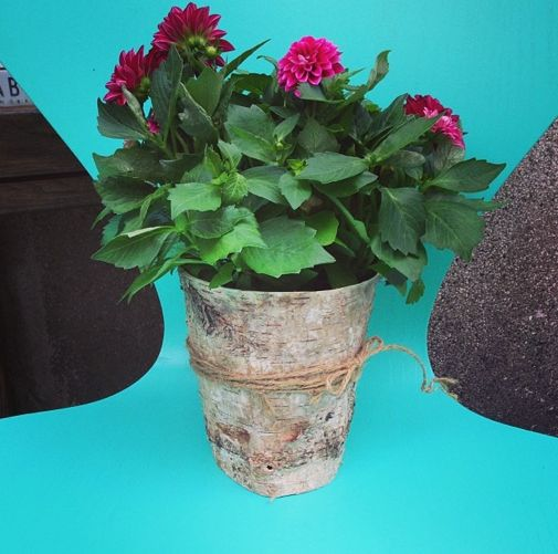 Easy and nice little DIY. Wrap some birch bark around an ugly flowerpot, fix it with a simple string and voilá! www.nord-design.at