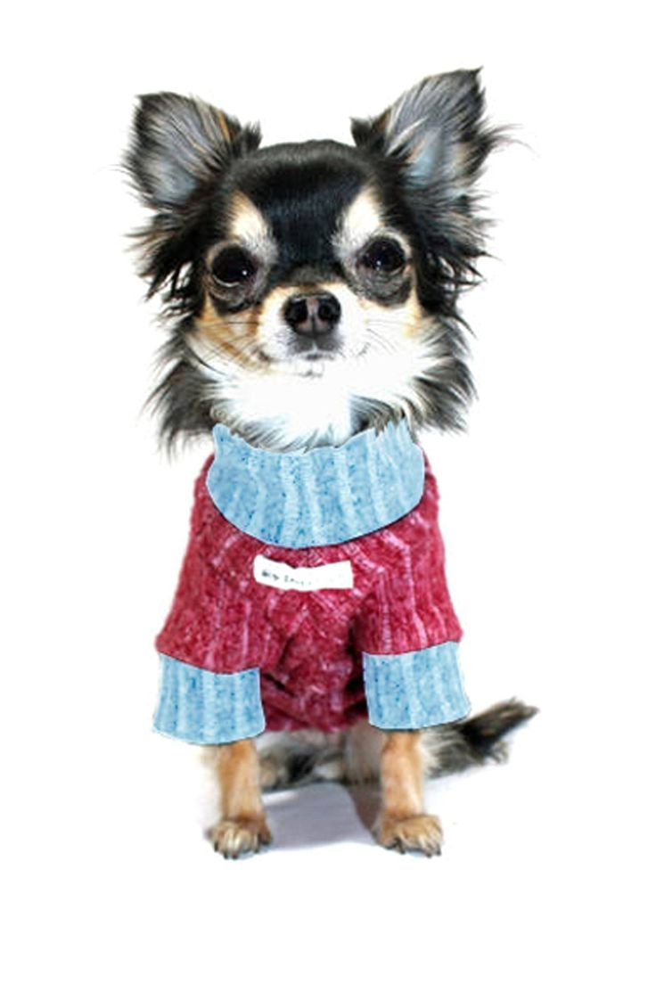 Star Turtleneck - Scarlett and Grey on HauteLook  For Chico my chihuahua