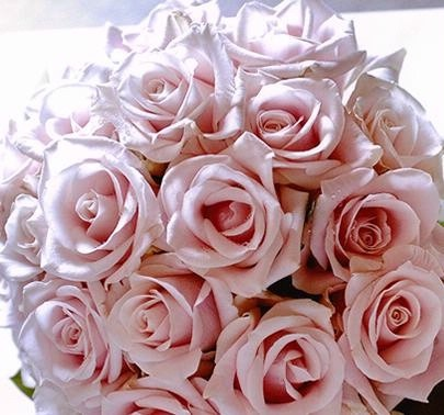 My Choice Of Flowers No Foliage Other Just Candy Bianca Roses