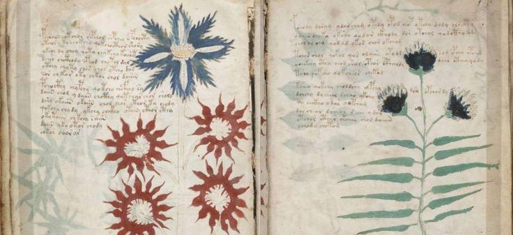 La page 31 du manuscrit de Voynich | via Archive.org CC License by