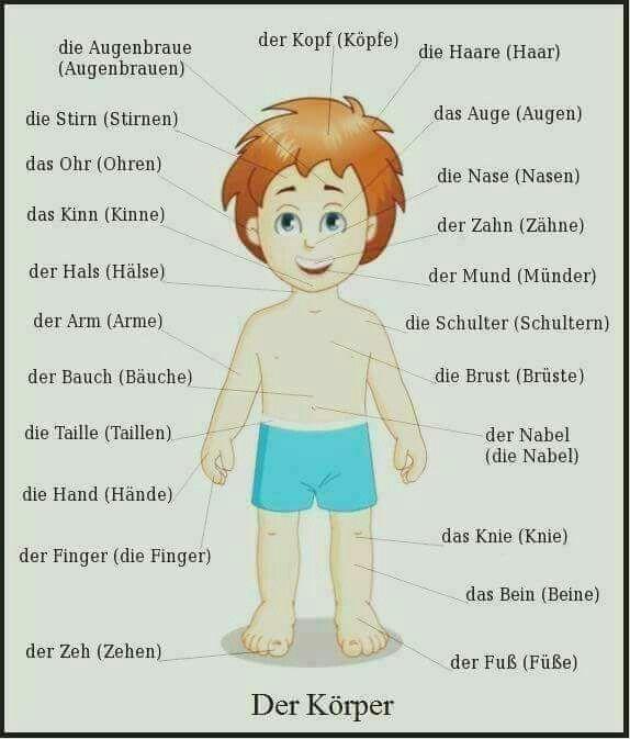 Der Korper Palavras Em Alemao Aprender Alemao Estudar Alemao