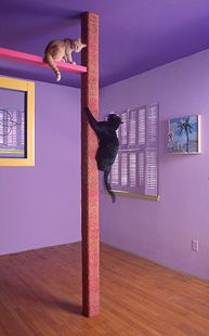 Floor to ceiling scratching post/climbing pole (cover the poles in the basement w/ rope!)