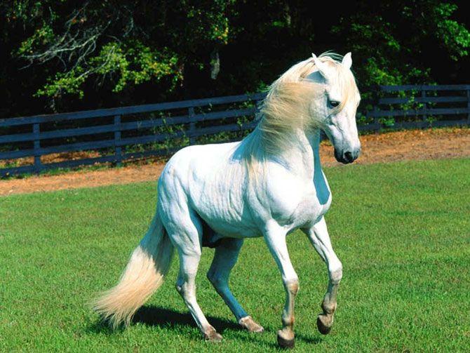 Hermosura de animal...