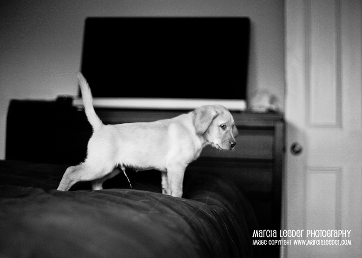 Cooper is the very definition of a naughty puppy.  www.marcialeeder
