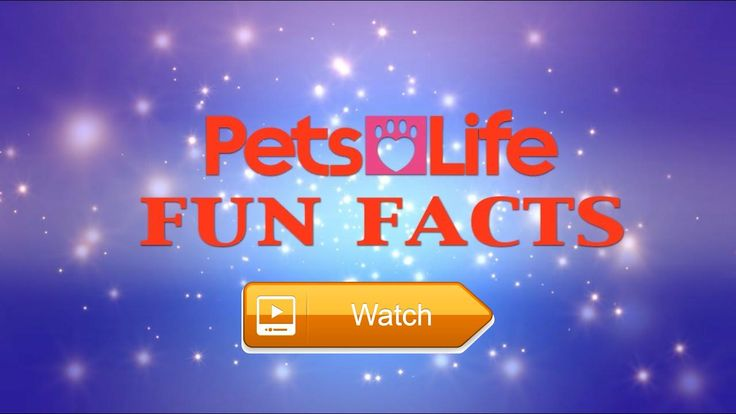 Fun Facts about Cats and Dogs  Keith runs through his favourite fun facts about everyones favourite pets cats and dogs  on Pet Lovers