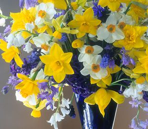 "Old House Gardens | Daffodil Bouquet ""'Sweetness', 'Geranium', and 'Double Campernelle' daffodils with bluebells and grape hyacinths in a bouquet by the amazing Suzanne Lewis.""  What a great combination to plant near each other for maximum impact! Website links to a great site for when/how to cut flowers from bulbs for arrangements."