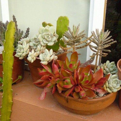 ♥: Gardens Ideas, Modern Gardens, Outdoor Succulents, Garden Ideas, Succulents Can, Gardens Design Ideas, Succulents Gardens, Succulent Gardens, Succulents Arrangements