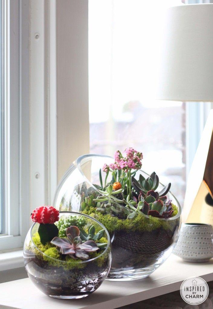 Best 20 Indoor succulent garden ideas on Pinterest Indoor