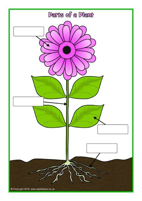 Simple Parts Of A Plant Poster Worksheet Sb12379